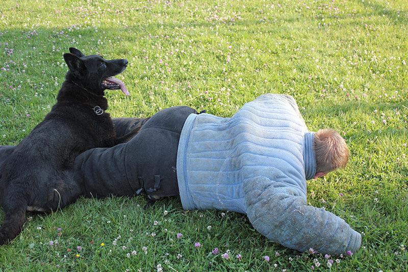 obrana proti psovi armytraining.sk